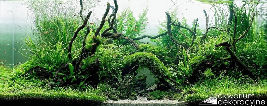 akwarium-dekoracyjne-Further-to-the-north-Paweł-Mielniczek-9 paweł mielniczek 2