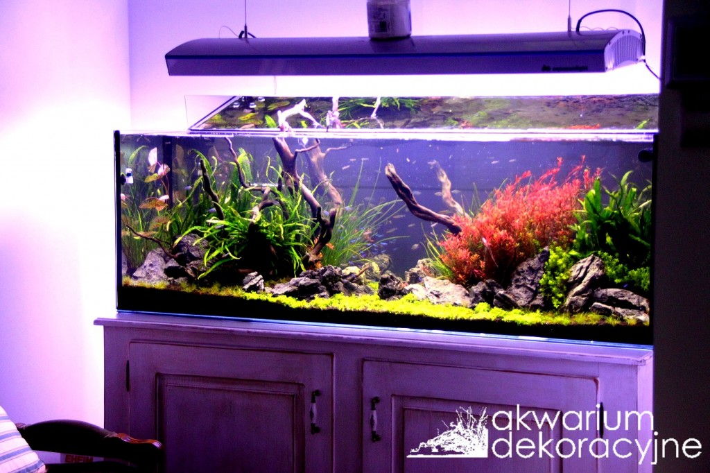 akwarium dekoracyjne zakładanie akwarium projektowanie akwariów warszawa poska 2