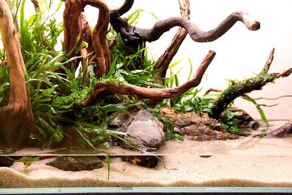 akwarium mizube azoo 1