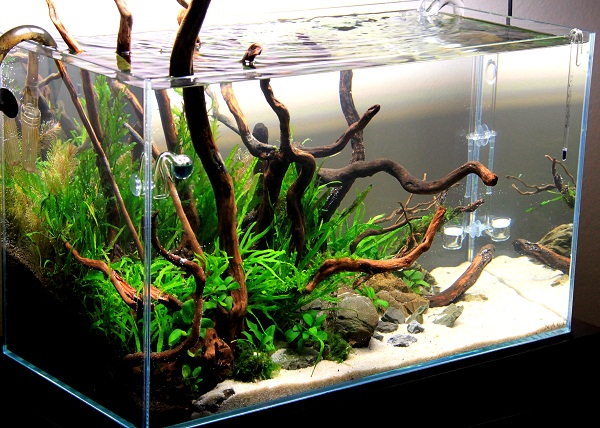 akwarium mizube azoo 2