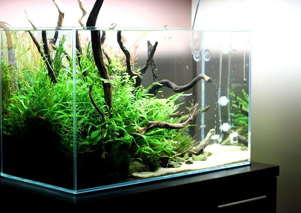 akwarium mizube azoo 4