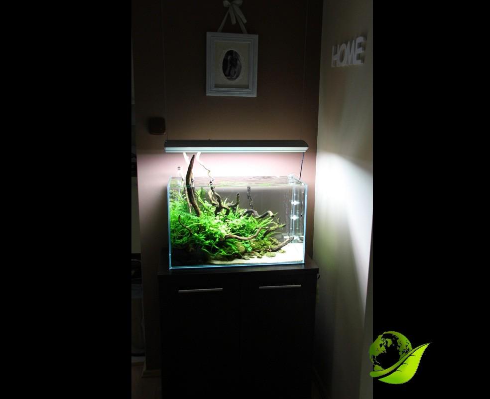 akwarium mizube azoo 5