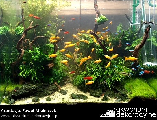 akwarium w ścianie zakładanie akwarium zakładanie akwariów akwarium dekoracyjne warszawa polska akwarium roślinne 1