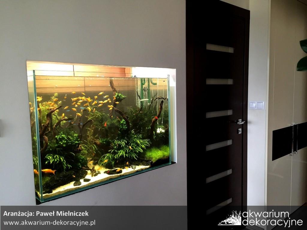 akwarium w ścianie zakładanie akwarium zakładanie akwariów akwarium dekoracyjne warszawa polska akwarium roślinne