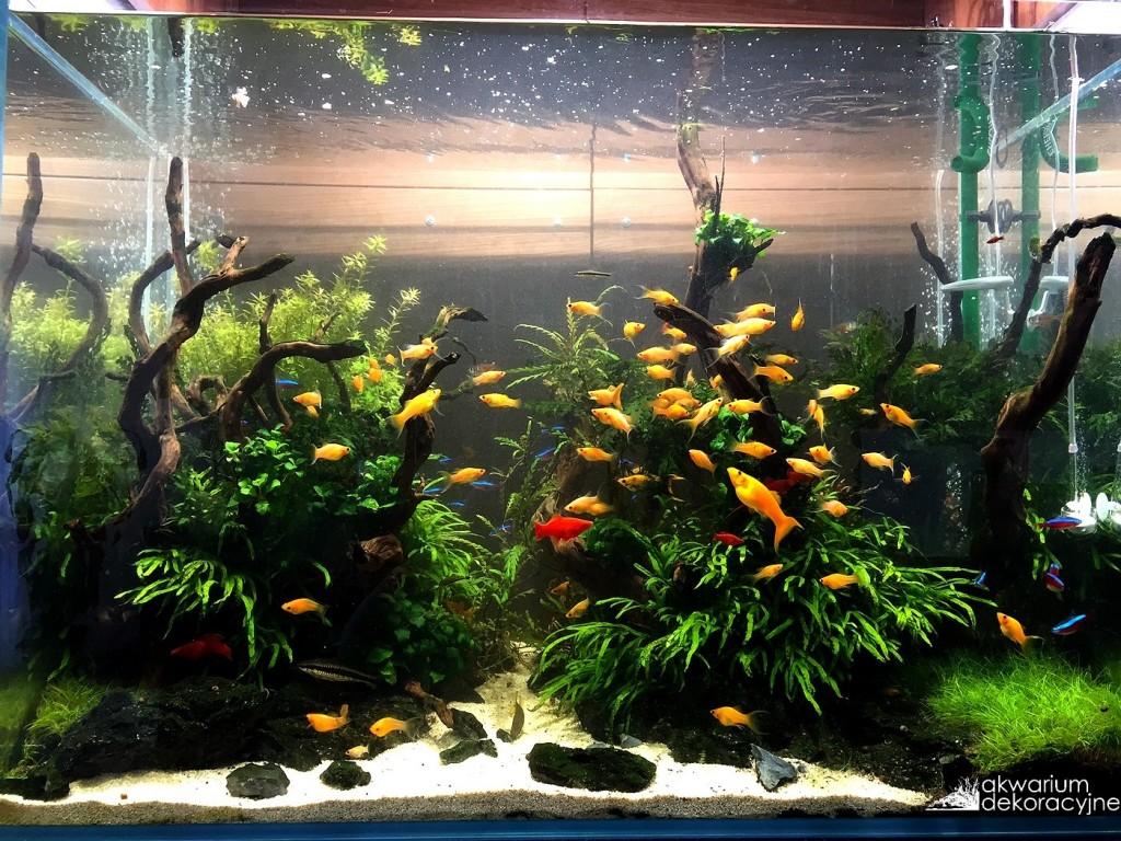 akwarium w ścianie zakładanie akwarium zakładanie akwariów akwarium dekoracyjne warszawa polska