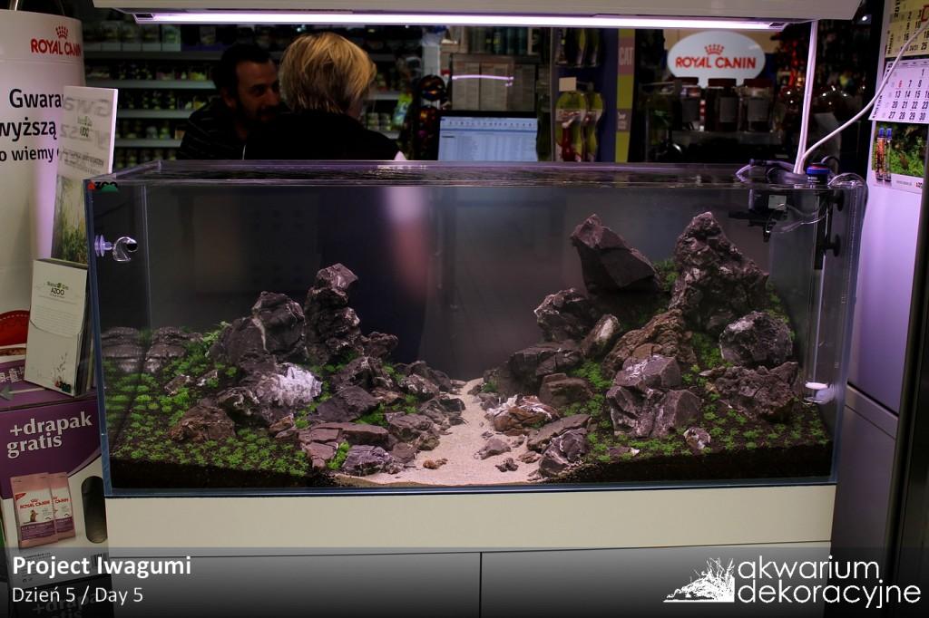zakładanie akwarium dekoracyjne warszawa aquarius jubilerska 18