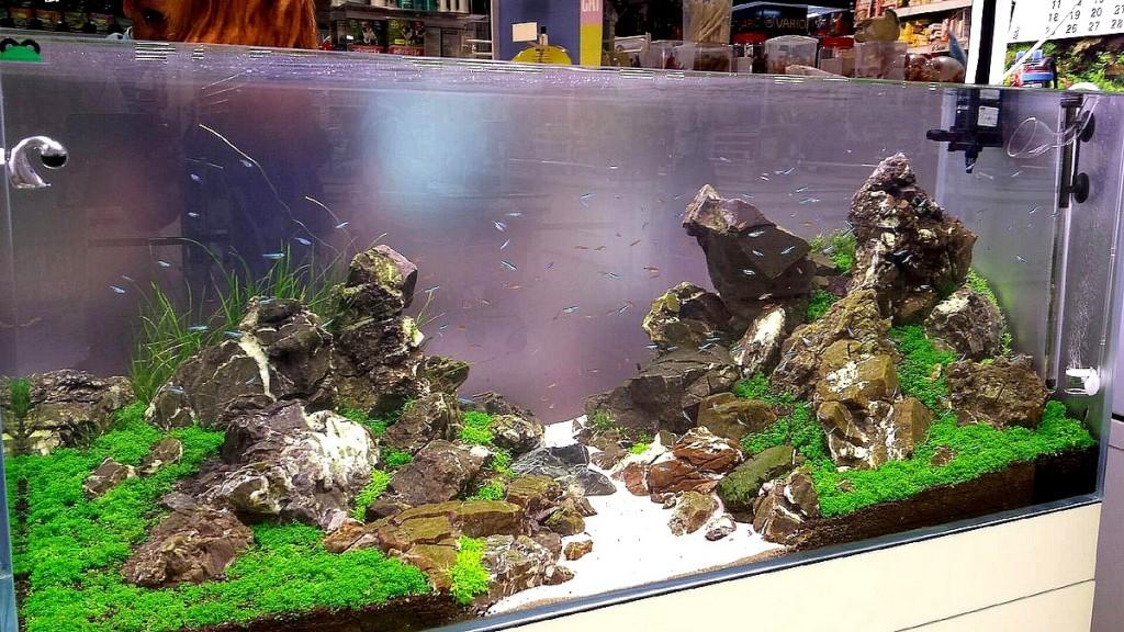 zakładanie akwarium iwagumi dekoracyjne warszawa aquarius jubilerska aquascape nature aquarium