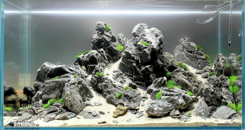 zakładanie akwarium naturalne iwagumi optiwhite elos ada manten stones