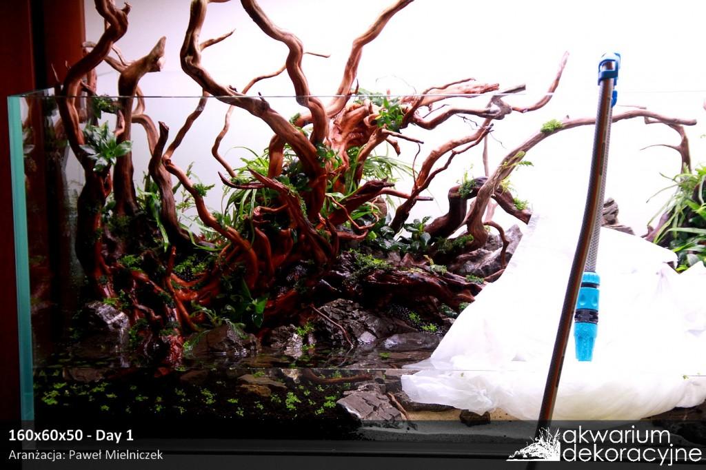 Akwarium dekoracyjne zakładanie akwarium zakładanie akwariów warszawa polska piaseczno akwarium naturalne nature aquarium aquascape 2