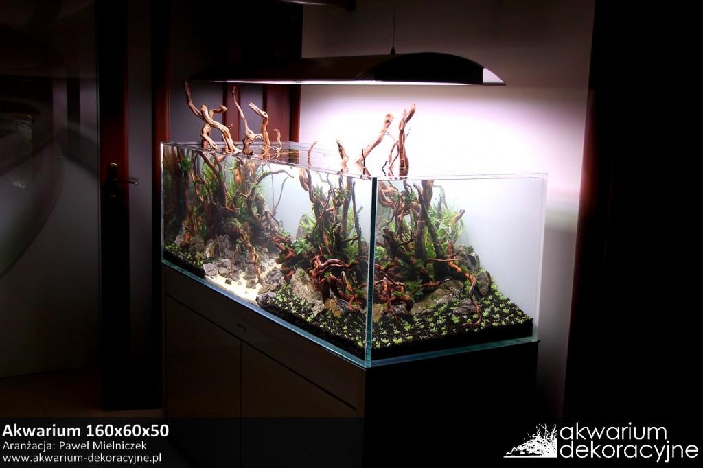 Akwarium dekoracyjne zakładanie akwarium zakładanie akwariów warszawa polska piaseczno akwarium naturalne nature aquarium aquascape 3