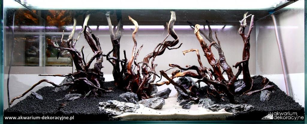 Akwarium dekoracyjne zakładanie akwarium zakładanie akwariów warszawa polska piaseczno akwarium naturalne rośliny invitro rośliny w żelu laboratorium 313 1