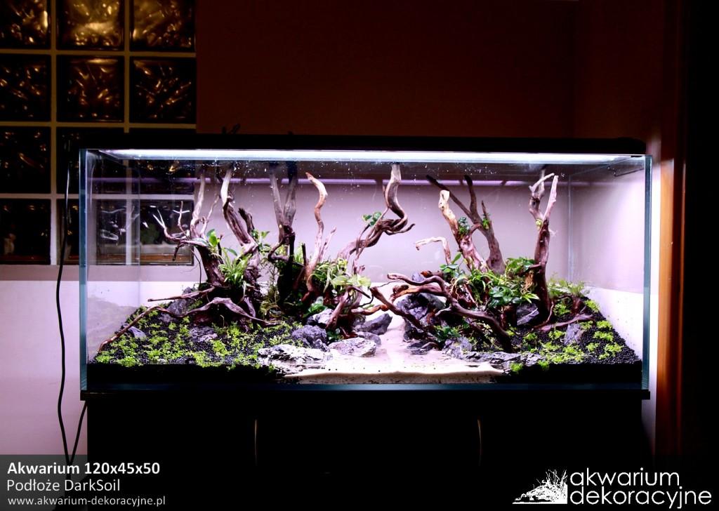 Akwarium dekoracyjne zakładanie akwarium zakładanie akwariów warszawa polska piaseczno akwarium naturalne rośliny invitro rośliny w żelu laboratorium 313 2