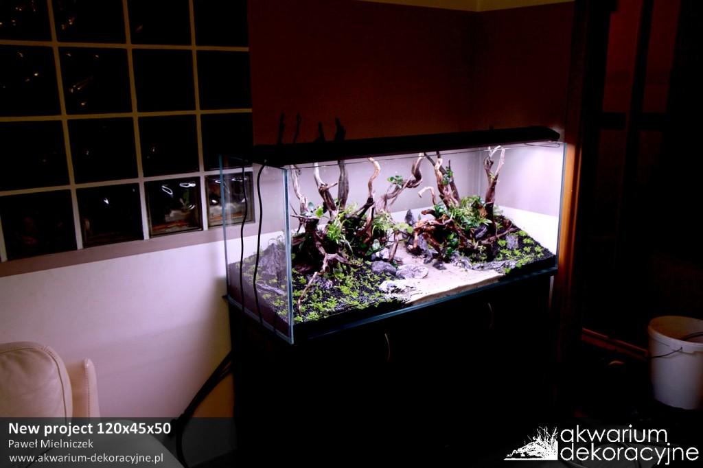Akwarium dekoracyjne zakładanie akwarium zakładanie akwariów warszawa polska piaseczno akwarium naturalne rośliny invitro rośliny w żelu laboratorium 313 3