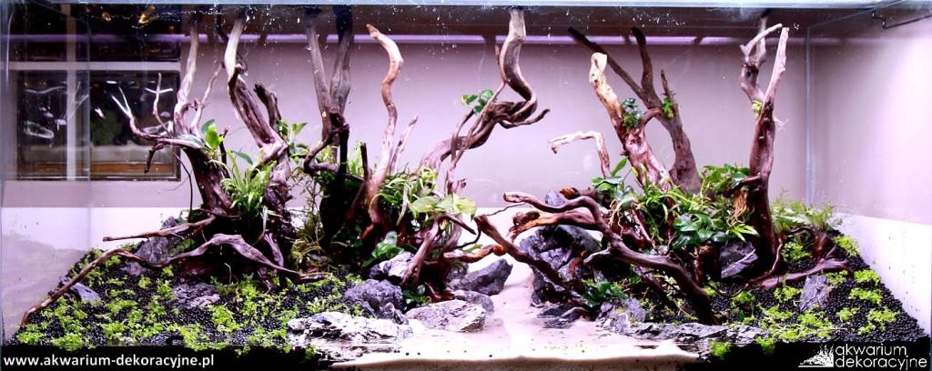 Akwarium dekoracyjne zakładanie akwarium zakładanie akwariów warszawa polska piaseczno akwarium naturalne rośliny invitro rośliny w żelu laboratorium 313 4