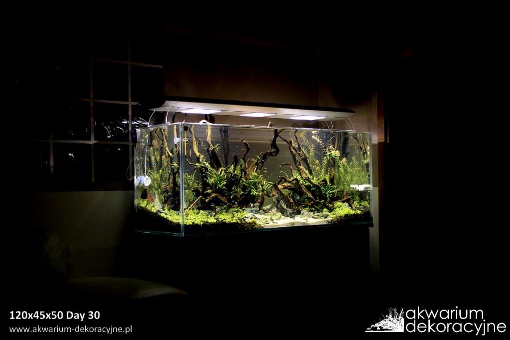 Akwarium dekoracyjne zakładanie akwarium zakładanie akwariów warszawa polska piaseczno akwarium naturalne rośliny invitro rośliny w żelu laboratorium 313 6
