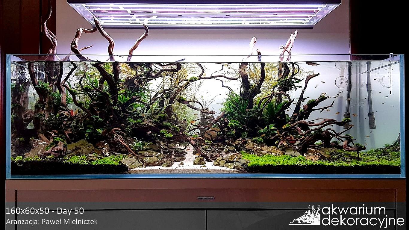 Archiwa akwarium akwarium dekoracyjne for Aqua design oldenburg