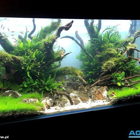 Galeria Zakladanie Akwarium Akwarium Dekoracyjne