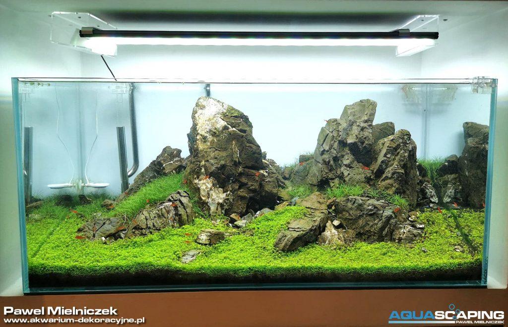 zakładanie akwarium iwagumi