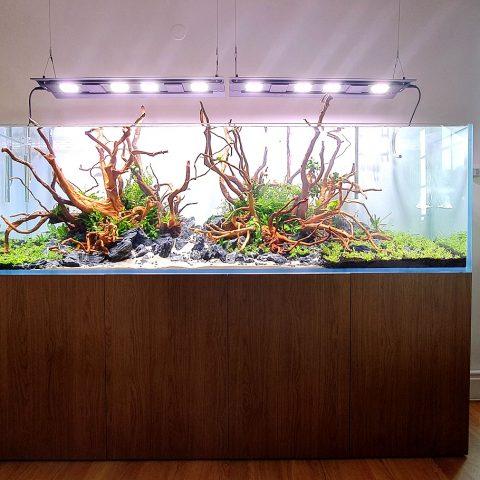akwarium dekoracyjne