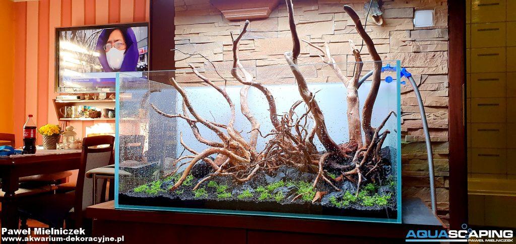 zakładanie akwarium roślinnego