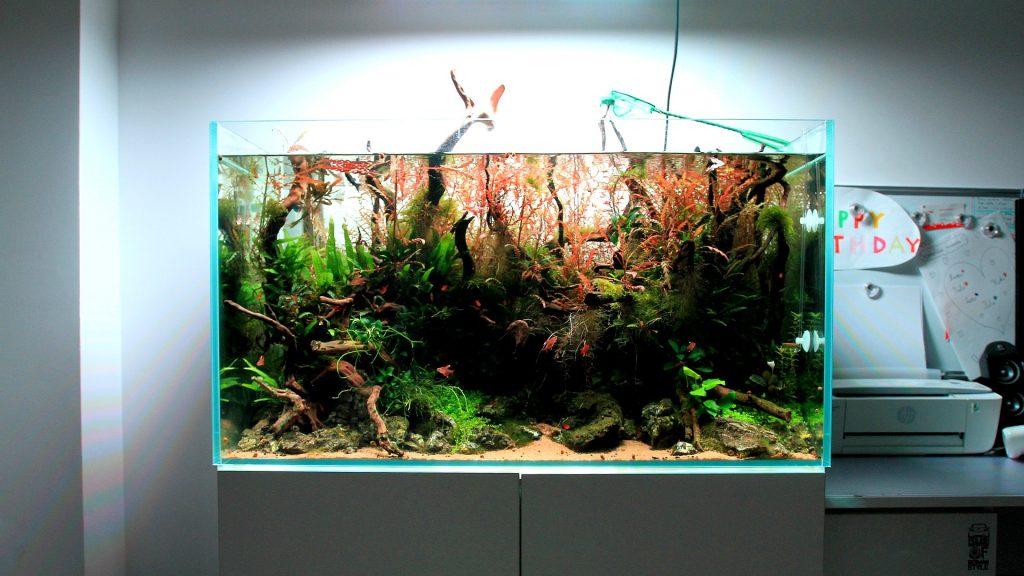 nawozy aquaforest
