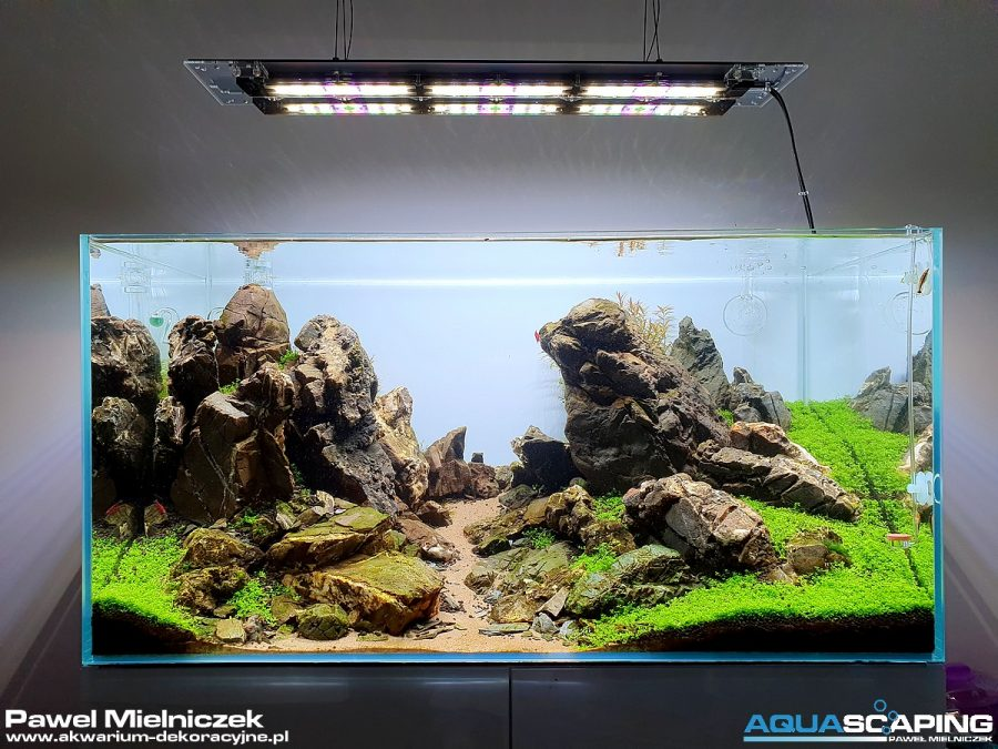 Akwarium dekoracyjne 90x50x45