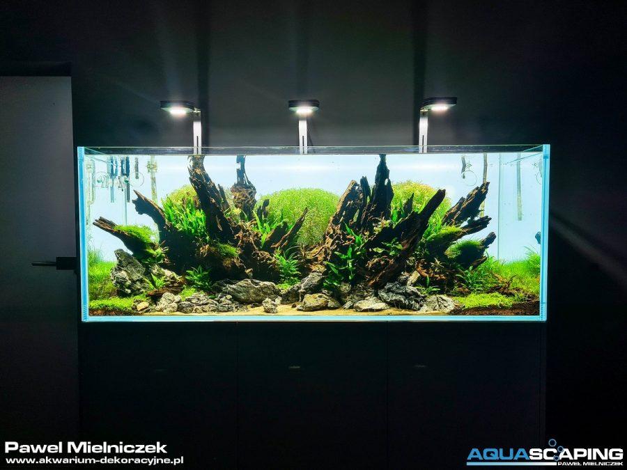Akwarium dekoracyjne Paweł Mielniczek Aquascaping