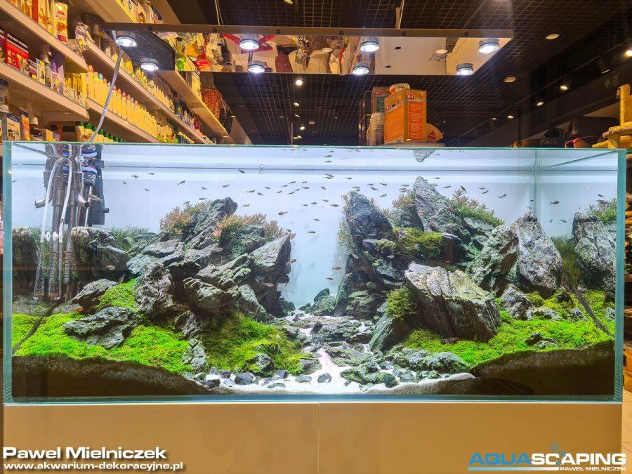 Akwarium roślinne Iwagumi zakładanie