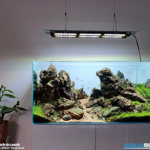 akwarium dekoracyjne Iwagumi